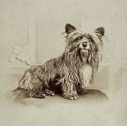 Greyfriars Bobby Skye Terrier Dog antique vintage photo cute photograph 1890s