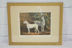 Vintage Prints Illustrated Book Of The Dog Bull Terrier Dalmatian