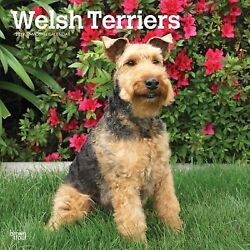 Welsh Terriers 2019 Calendar Paperback by Browntrout Publishers (COR) ISBN ...