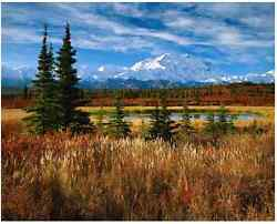 Rodney Lough Jr Denali Morning Limited Edition 34/500 20x24 Matted And Framed