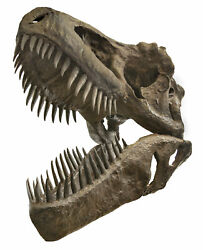 Incredible Full Size Tyrannosaurus Rex Skull Replica - 5and039 X 3and039 X 4.5and039 -hbarsci