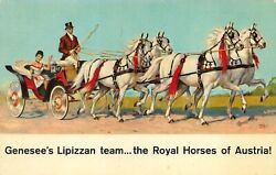 Rochester Ny Genesee Brewing Co. Jenny And Her Famous Lipizzans Horses Postcard