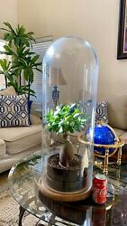 Large Early Victorian Blown Glass Dome On Wood Base 29'' X 10'' / Very Rare