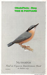 R394332 Nuthatch. Feed On Caperns Insectivorous Food In Packets Only