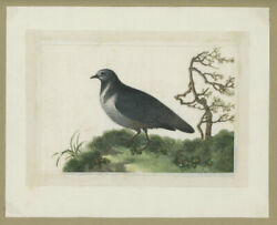 Chinese Pith Painting Of A / Chinese Watercolor Painting Of Bird On Pith Paper