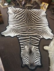 Gorgeous Zebra Rug Shoulder Mount Taxidermy New Holland Pa