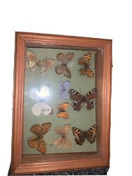 10 Vintage Butterfly Taxidermy Collection Framed Display Case Real Rare