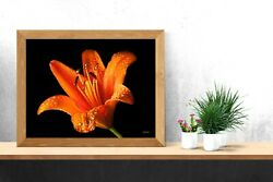 Orange Lily Flower After Rain Poster Print Wall Art Home Decor Gift Ideas Nature