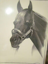 Kentucky Derby Orginal Art Drawing Of Seattle Slew Awsome Find