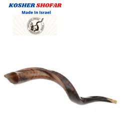 Kudu Yemenite Horn Shofar 16and039and039-19and039and039 New And Kosher Made In Israel