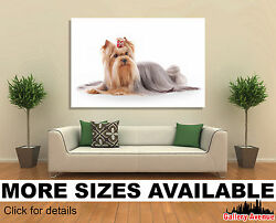 Wall Art Canvas Picture Print - Yorkie Yorkshire Puppy Dog 3.2