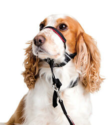 Halti OptiFit Headcollar for Dogs S Size Guaranteed To Stop Pulling Optimum Fit
