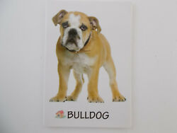 Small Rectangular Dog Breed Fridge Magnet Bull Dog Breed SpecificPet