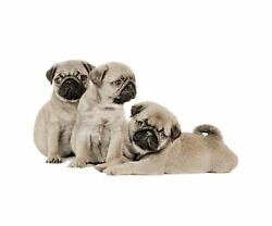 Throw 3D Pugs Print High Quality warm Soft MINK FAUX FUR BLANKET For Bed Sofa
