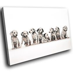 A033 Dalmatian Puppy Dogs Black Funky Animal Canvas Wall Art Large Picture Print