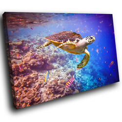 A445 Ocean Coral Reef  Turtle Funky Animal Canvas Wall Art Large Picture Prints