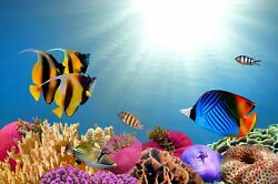 wall decor for living rooms tropical fish under the sea art poster