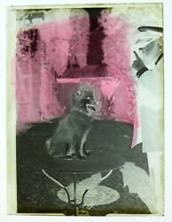 Photo Negative On Glass The Dog And Sound Master To 1910 Curiosity Masking Tape
