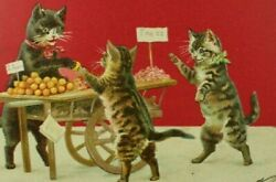 Cute Cats At Market Buying Oranges And Fruit Anthropomorphic Cat Postcard