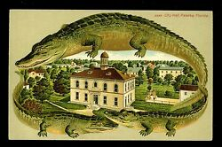Alligator Border Postcard City Hall Palatka Florida FL Langsdorf S538 RARE Card
