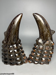 Nongovernmental Collection Delicate Ox Horn Hand Carving Ox Horn Tip