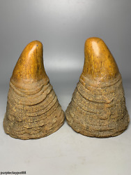 Old Collection Ox Horn Manual Carving Small Striation Ox Horn Tip