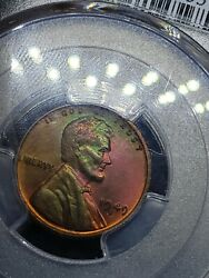 1949 D Wheat Cent Penny Incredible Rainbow Toning Pcgs Ms65 Rb
