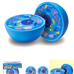 Learning Resources Cross-section Animal Cell Model Soft Foam Early Biology...