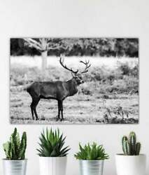 Stag Print At Richmond Park London Deer Pictures For Sale Red Deer Photography