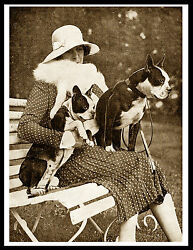 BOSTON TERRIER LADY AND HER DOGS LOVELY VINTAGE STYLE DOG PHOTO PRINT POSTER