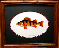 Yellow Perch Ducks Unlimited Edition Fishing Lures Pan Fish Freshwater Art Work