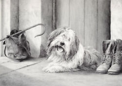 Bearded Collie Beardie Dog Art Limited Edition Print - Ready And Waiting