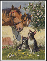 BOSTON TERRIER DOGS AND HORSES LOVELY VINTAGE STYLE DOG ART PRINT POSTER