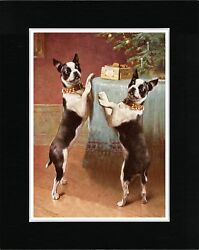 BOSTON TERRIER LOVELY VINTAGE STYLE DOG ART PRINT MATTED READY TO FRAME