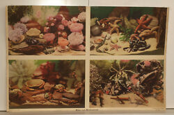 Wall Picture Wall Map North Sea Shells Crabs Starfish Poster 89x58 Vintage 1953