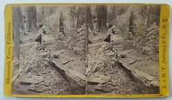 Mammoth Trees, California, Father Of The Forest, 450 Feet Long Stereoview Photo
