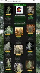 Hemp Seeds  weed seed and glass website go check it out MMJGLASSPRO.COM