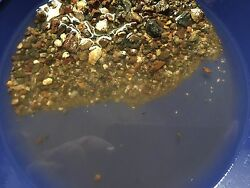 Unsearched Gold Paydirt Panning From The Arizona Bradshaw Mountains