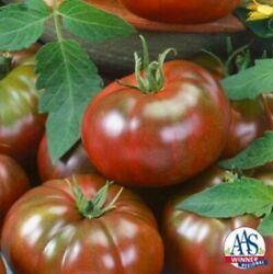 Chefs Choice Black Tomato 8 Seeds Aas Free Shipping Usa Grown
