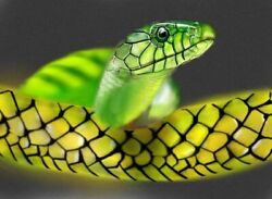 Snake Image Photo Picture Beautiful Animals Animal Aesthetic Dragon Face Nature
