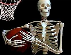 Life Size Human Anatomical Skeleton Model 170cm For Student And Doctor