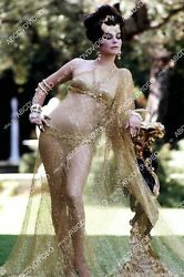 8b20-20642 Shapely Natalie Wood In Her Sheer Gold Outfit 8b20-20642