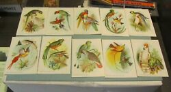 Antique Tropical Birds In Pairs 10 Color Victorian Trade Card Lot Cockatoo Macaw
