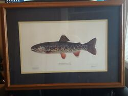 Mack Creek Cutthroat Trout By Joseph Tomelleri Limited Edition Signed Print