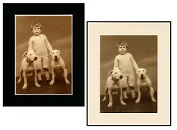 SMALL BOY ENGLISH BULL TERRIER DOGS DOG PRINT READY MATTED IN BLACK OR CREAM