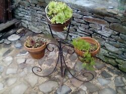 Vintage French Metal Plant Stand Wrought Iron