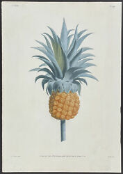 Prevost - Pineapple. 44, 1805 Collection Hand-colored Stippled Engraving