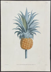 Prevost - Pineapple. 44 1805 Collection Hand-colored Stippled Engraving