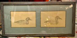 Rare 1936 Duck Decoy Pencil Drawing By Dan F. Brown Wards Bluebill And Canvasback