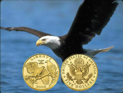 2008 Us Mint Uncirculated Commemorative Eagle 5 Gold 1/4 Oz Coin With Box And Coa